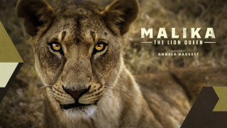 Malika the Lion Queen (2021) Full Movie - HD 720p